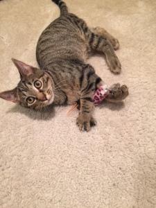I finally got the chance to meet Dan's cousin Jill's adorable cat Franklin :)